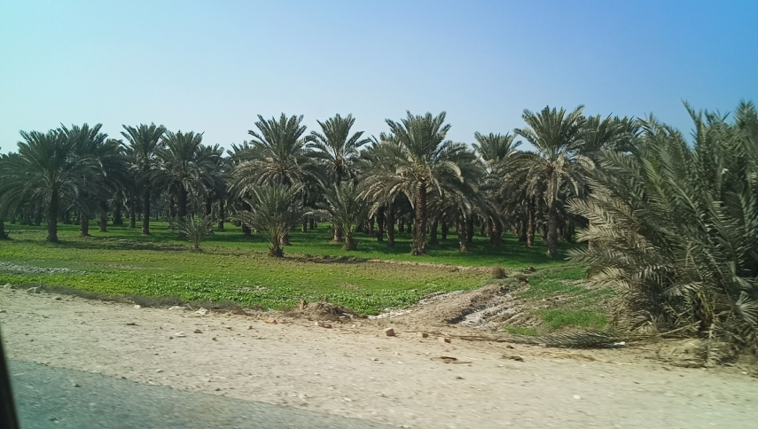 Ber Sharif Village (20)